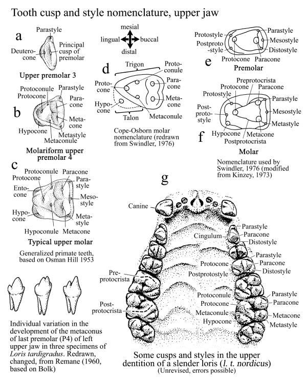 Mouth Teeth Name In Human Manual Guide